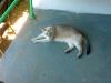 Кошка с голубыми глазами, прилагается к кухне (совершенно бесплатно)