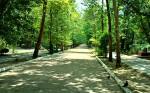 Саки курортный парк